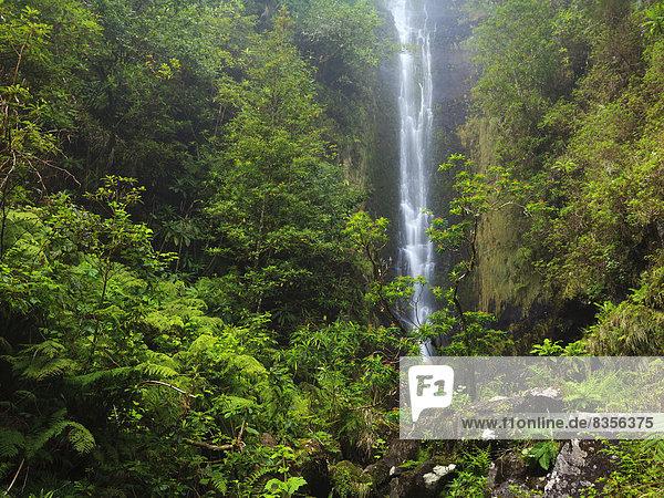 Wasserfall an einer Levada  künstlicher Wasserlauf  Ponta do Sol  Madeira  Portugal