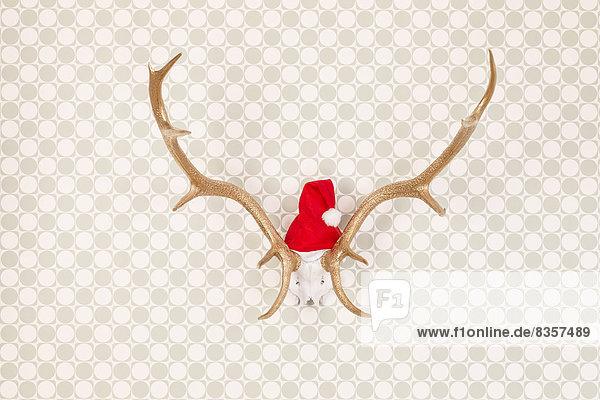 Goldlackiertes Geweih mit Weihnachtsmütze auf Tapete  Studioaufnahme