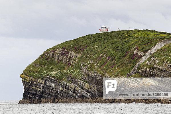 Irland  County Clare  Küstenlandschaft an der Shannon-Mündung