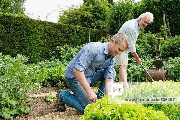 Vater und erwachsener Sohn Gartenarbeit