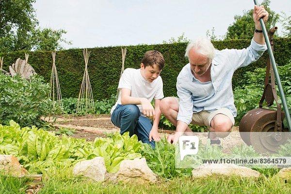 Großvater und Enkel Gartenarbeit