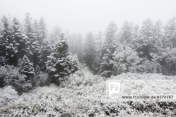 Snow Covered Trees And Bushes With Fog