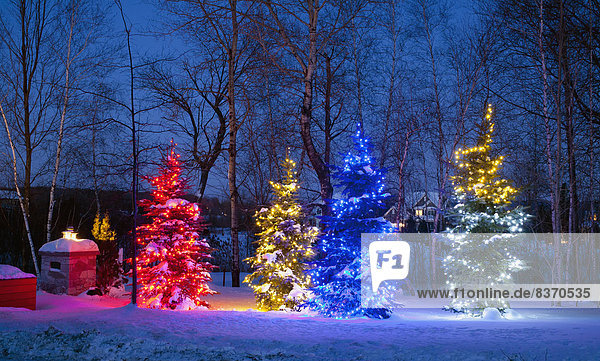Nacht  Baum  bunt  Beleuchtung  Licht  Weihnachten  Dekoration  Kanada  Quebec Weihnachtsbäume
