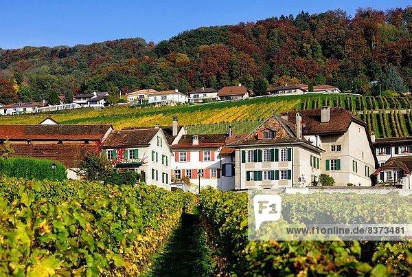 Anschnitt französisch Wein Individualität Frucht Gebäude Produktion Wahrzeichen Dorf sprechen Feld umgeben Duft Weinberg Zimmer Schweiz Kanton Waadt