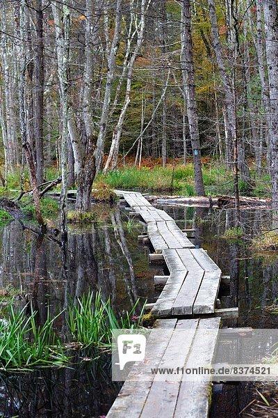 Vereinigte Staaten von Amerika  USA  Gewinn  Organisation  organisieren  Landschaft  Herbst  Ökologie  Zimmer  Sumpf  Ordnung  50  Hampshire  neu
