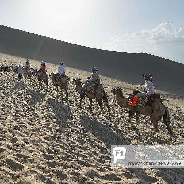 fahren Tourist China Kamel mitfahren