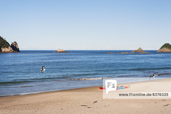 sitzend Strand Kajak Coromandel Neuseeland Halbinsel