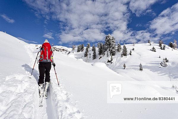 Skitourengeher beim Aufstieg auf den Cima Juribrutto  Dolomiten  Trentino  Italien
