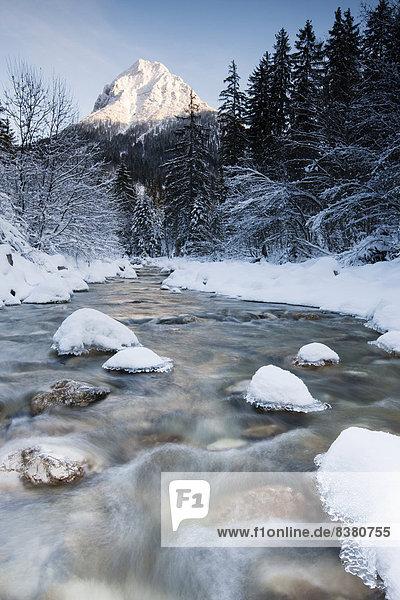 Verschneite Bäume am Bach Ampelsbachl im Winter  hinten der Berg Guffert  Achental  Tirol  Österreich Verschneite Bäume am Bach Ampelsbachl im Winter, hinten der Berg Guffert, Achental, Tirol, Österreich