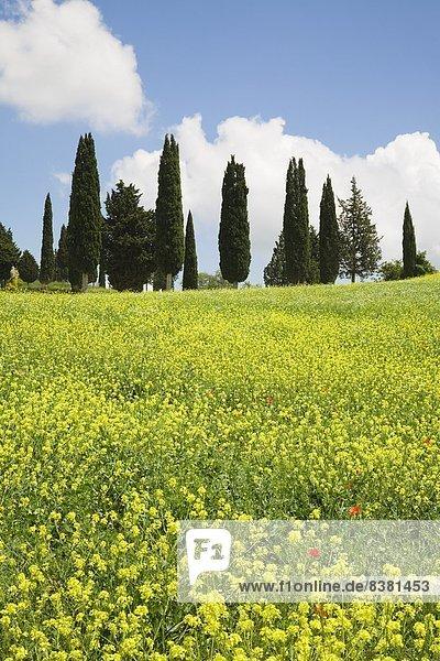 nahe  Europa  Tal  Italien  Pienza  Toskana