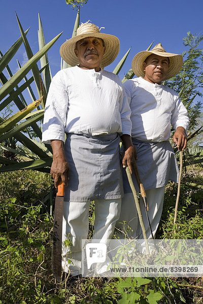 Sisalarbeiter auf einem Agavenfeld auf der Hacienda de Sotuta de Peon  Mérida  Yucatán  Mexiko