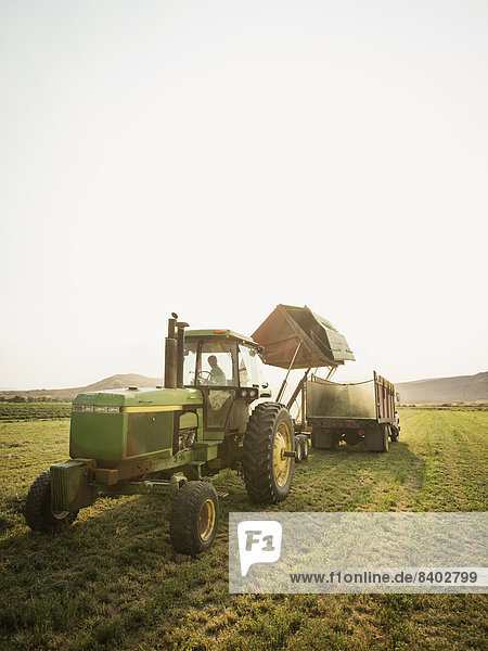 Europäer  fahren  Traktor  Nutzpflanze  Feld  Bauer