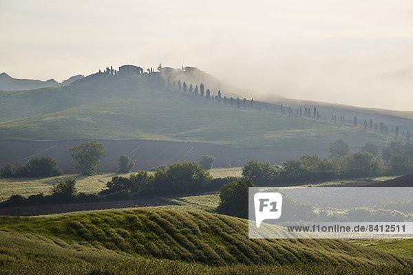 Nebelschwaden in den Tälern der Crete Senesi  Casetta  Taverne d'Arbia  Toskana  Italien