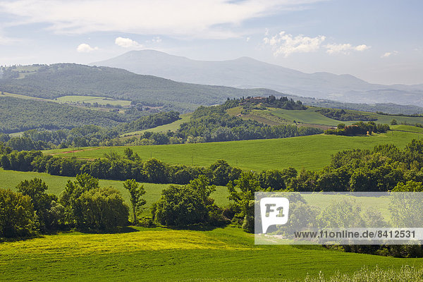 Hügelige Landschaft der Crete Senesi  Torrenieri  Toskana  Italien