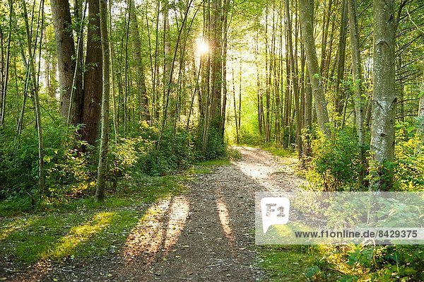 Canada  BC  Delta. Walking trail through deciduous forest in small village of Ladner.