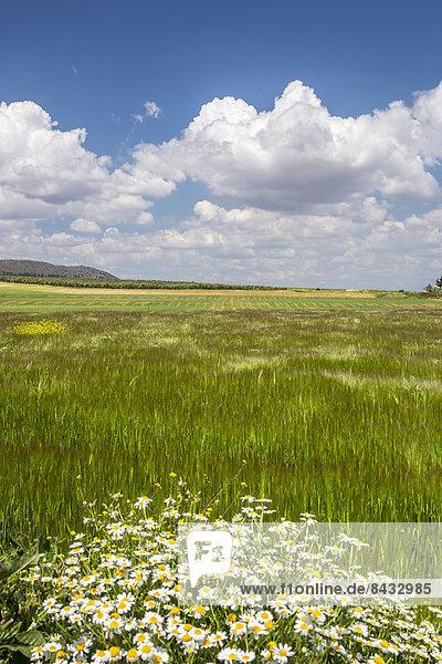 Skyline  Skylines  Farbe  Farben  Europa  Wolke  Blume  Landschaft  grün  bunt  Geographie  Andalusien  Malaga  Spanien