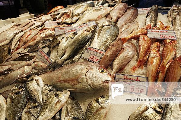 Portugal  Lisboa  Bica  Mercado da Ribeira Nova  Blick auf Fischbestand