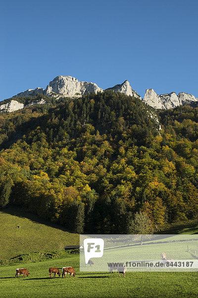 Schweiz  Kanton Appenzell Innerrhoden  Appenzeller Alpen  Kuhweide