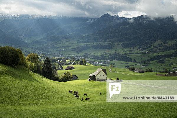 Schweiz  Kanton St. Gallen  Schweizer Alpen