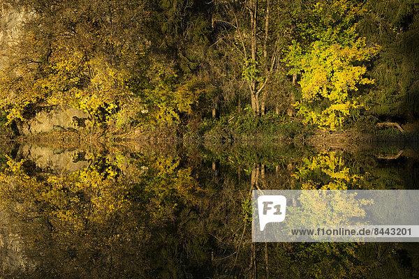 Deutschland  Baden-Württemberg  Naturpark Obere Donau  Wasserspiegelung im Herbst Deutschland, Baden-Württemberg, Naturpark Obere Donau, Wasserspiegelung im Herbst