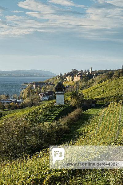Deutschland  Baden-Württemberg  Bodenseekreis  Haitnau  Weinberg und Bodensee