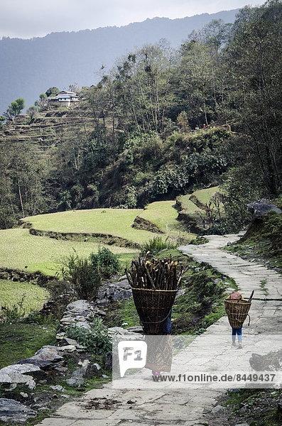 Feuerholz Frau tragen Wohnhaus Tochter Asien Ghandruk Nepal