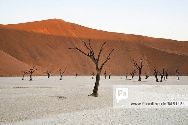 Menschlicher Vater  Baum  über  Turm  groß  großes  großer  große  großen  Düne  Namibia  Pfanne  Akazie  Afrika  Lehm