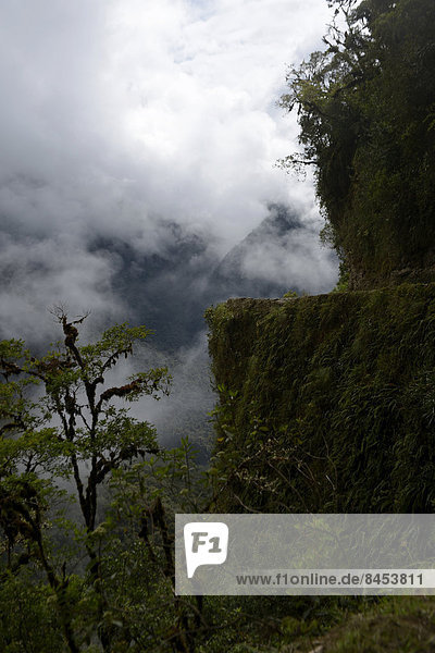 Ruta de La Muerte  Death Road  between La Paz and Coroico  Yungas  Department of La Paz  Bolivia