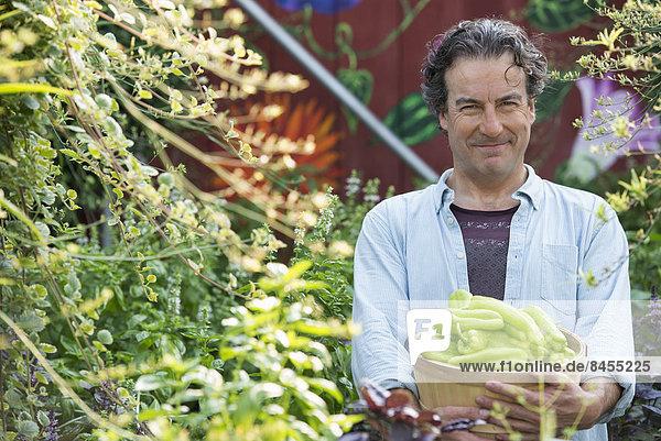 Sommer auf einem Biobauernhof. Ein Mann hält einen Korb mit frisch gepflücktem Gemüse in der Hand.