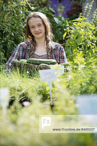 Sommer auf einem Biobauernhof. Ein Mädchen hält einen Korb mit frischen Kürbissen.