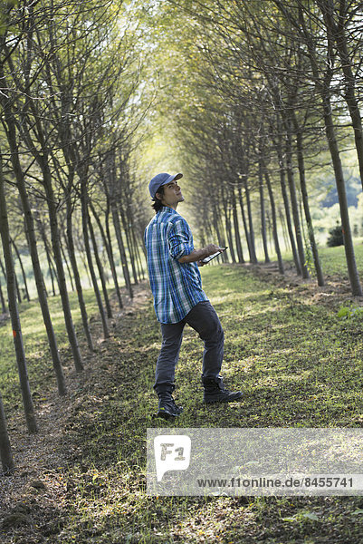 Ein Mann  der eine Baumallee hinuntergeht und nach oben schaut.