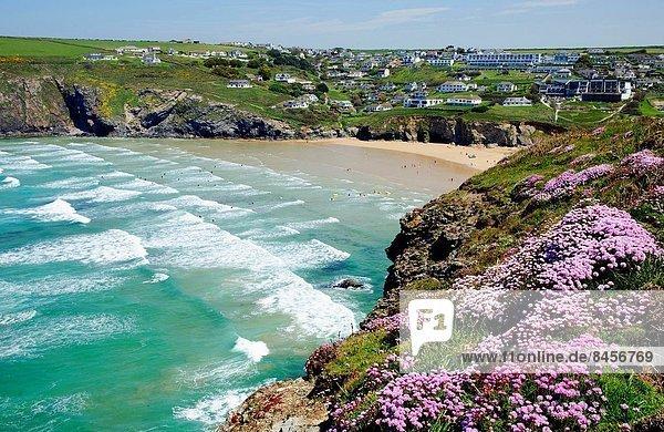 nahe  Blume  Großbritannien  Küste  blühen  Cornwall  England