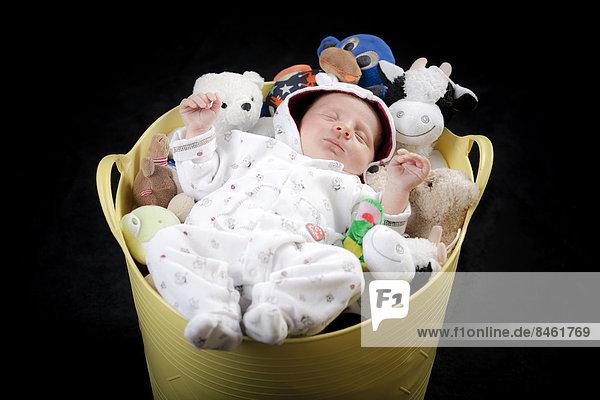 Baby schläft in einem Kübel mit Kuscheltieren Baby schläft in einem Kübel mit Kuscheltieren