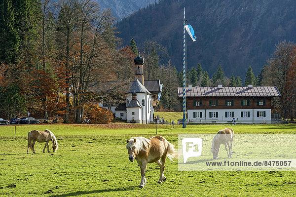 'Pferde auf der Weide  Altes Bad mit Badkapelle ''Zum Heiligen Kreuz''  Wildbad Kreuth  Oberbayern  Bayern  Deutschland'