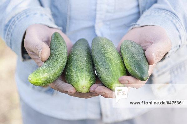 Mann hält Gurken aus Bio-Anbau in den Händen  Schweden