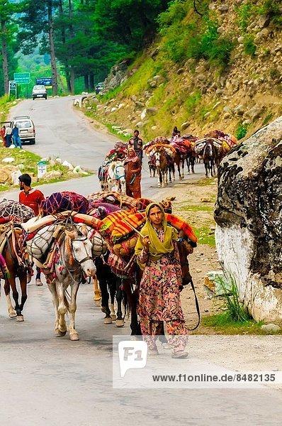 nahe  Berg  Mensch  Menschen  Stadt  reiten - Pferd  Nomade  Indien