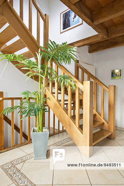 Pflanze Topfpflanze modernes Zuhause