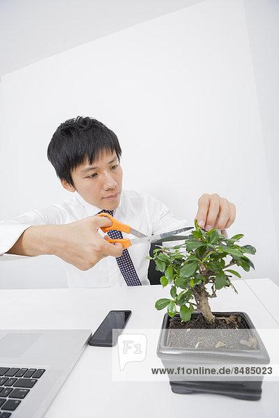 Schreibtisch Geschäftsmann Pflanze Büro beschneiden