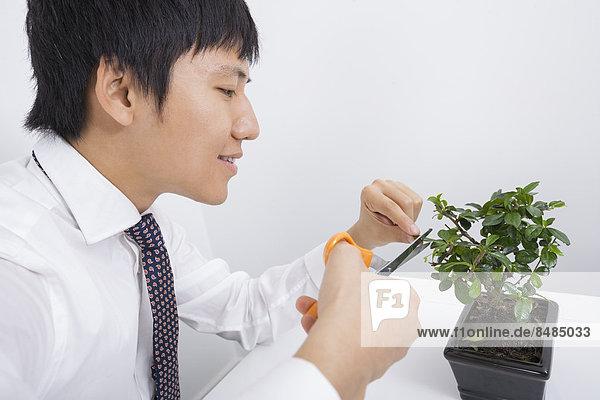Fröhlichkeit  Geschäftsmann  Pflanze  Büro  Mittelpunkt  Blumentopf  Erwachsener  beschneiden