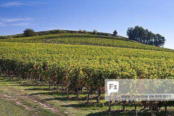 Frankreich  Wein  Hügel  Geographie  Bordeaux  Weinberg