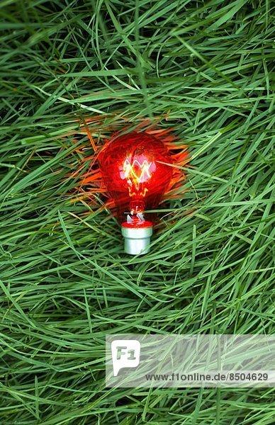 Stillleben der roten Glühbirne auf Gras