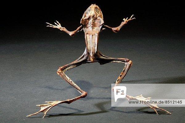 Stilleben  still  stills  Stillleben  Lifestyle  Frosch  schießen  Studioaufnahme