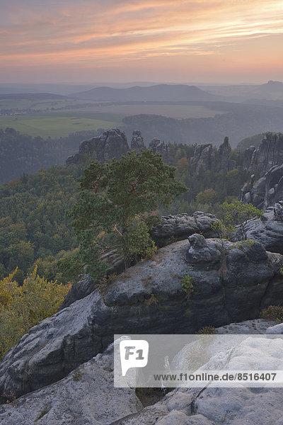 Ausblick über die Schrammsteine im Elbsandsteingebirge im Abendrot im Herbst  Sächsische Schweiz  Bad Schandau  Sachsen  Deutschland