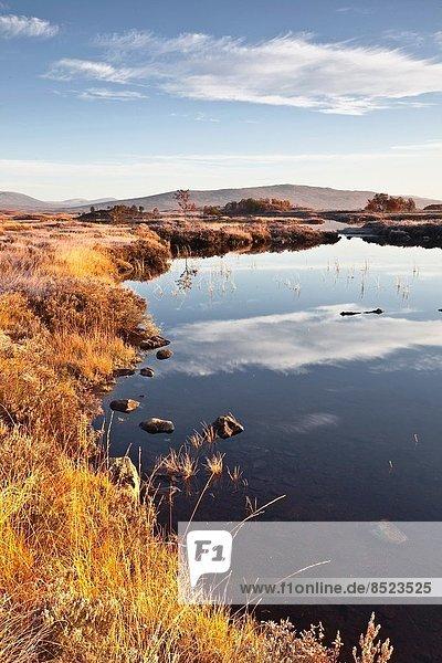 See  Moor  Schottland