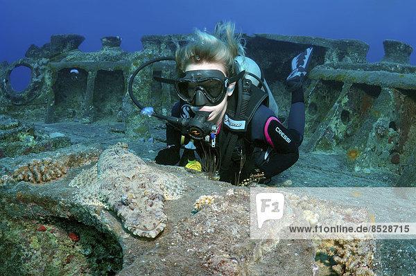 Taucher mit einem Teppich-Krokodilfisch (Papilloculiceps longiceps)  am Wrack der SS Thistlegorm  Rotes Meer  Ägypten