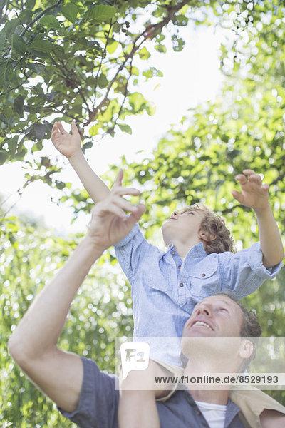 Vater trägt Sohn auf Schultern unter dem Baum