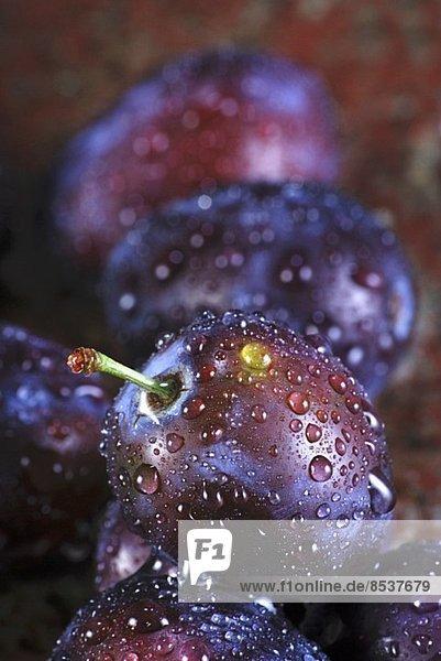 Pflaumen mit Wassertropfen (Close Up)