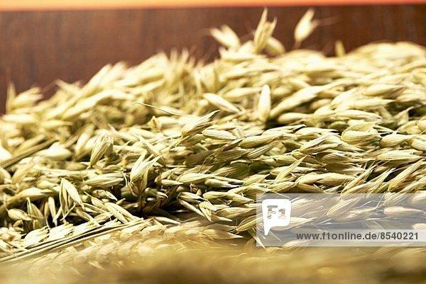 Weizenähren (Nahaufnahme)