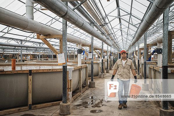 Ein großes Fischzuchtgebäude im Inneren mit erhöhten Wassertanks und Zuchtbereichen sowie ein Mann mit Eimern mit Wasser oder Futter.