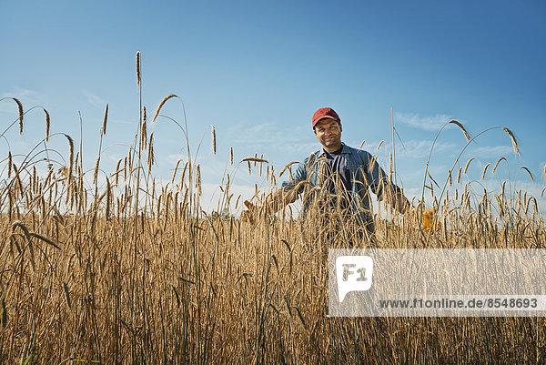 Ein Mann steht in einem Feld voller hoher reifender Weizen- oder Maishalme.